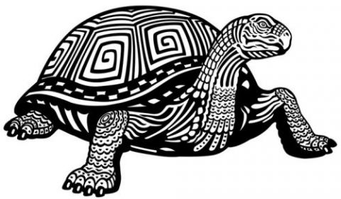 Kaplumbağa Gibi